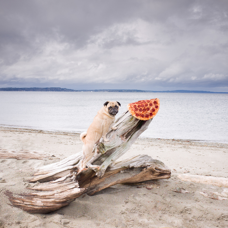 pug and pizza at the beach