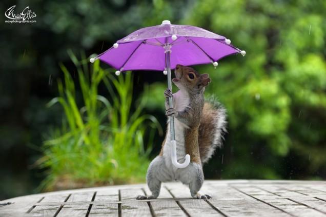 Squirrel and Umbrella