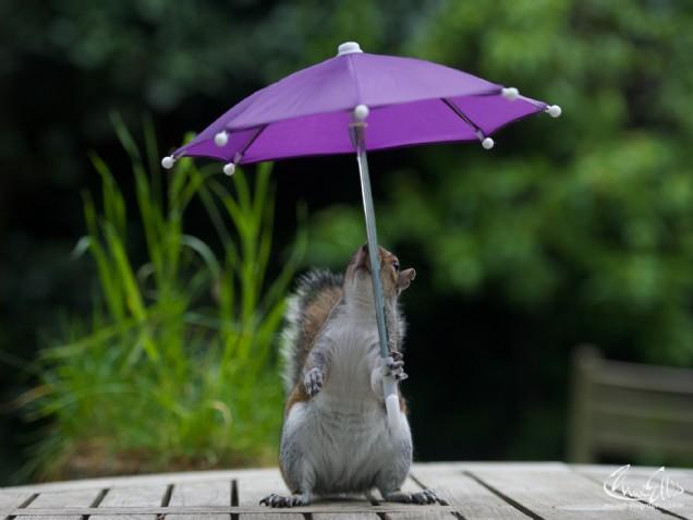 Squirrel Umbrella
