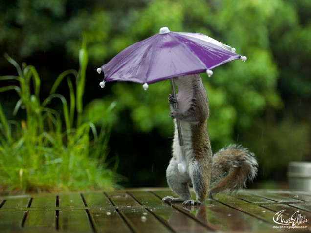 Squirrel and Umbrella