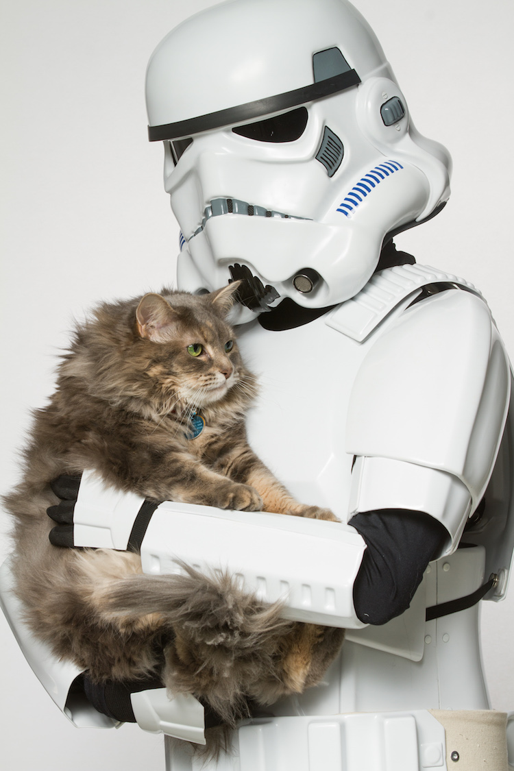 Storm Trooper and Maine Coon
