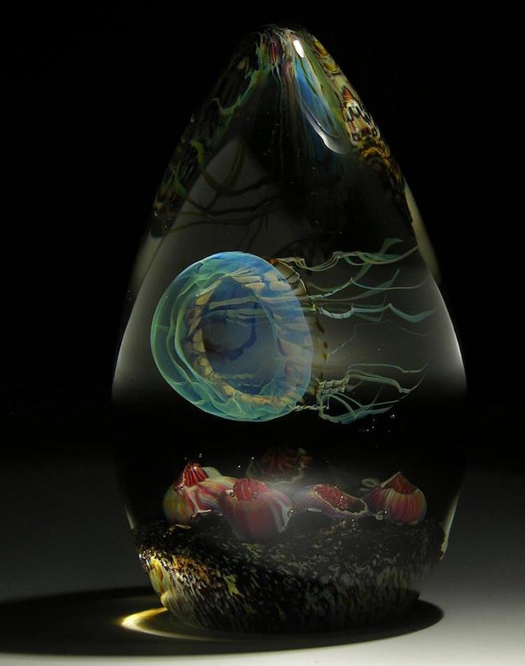 Teardrop shaped Moon Jellyfish