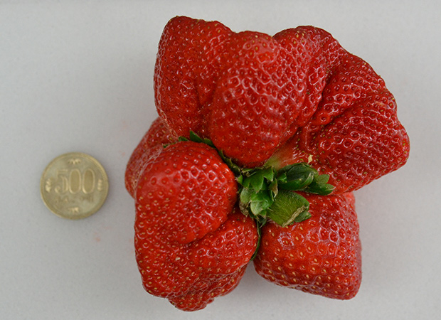 giant strawberry and coin