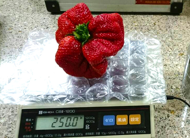 strawberry on scale