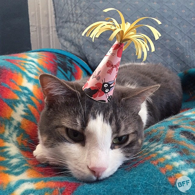 A Clever Instagram Account That Features Three Legged Cat Modeling Handcrafted Paper Hats