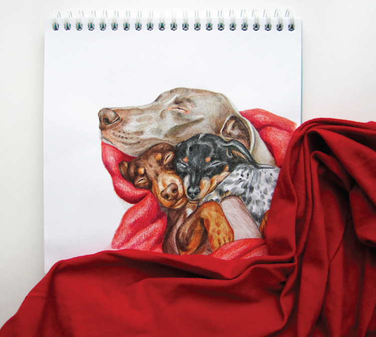 A Clever Series of Illustrations That Portray Dogs Appearing to Interact With Strategically Placed Tangible Objects