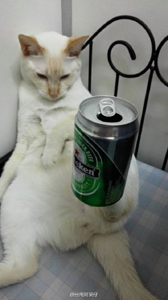 Cat Can