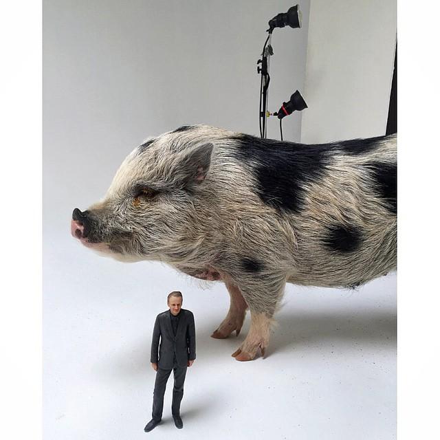 Likeness-Pig