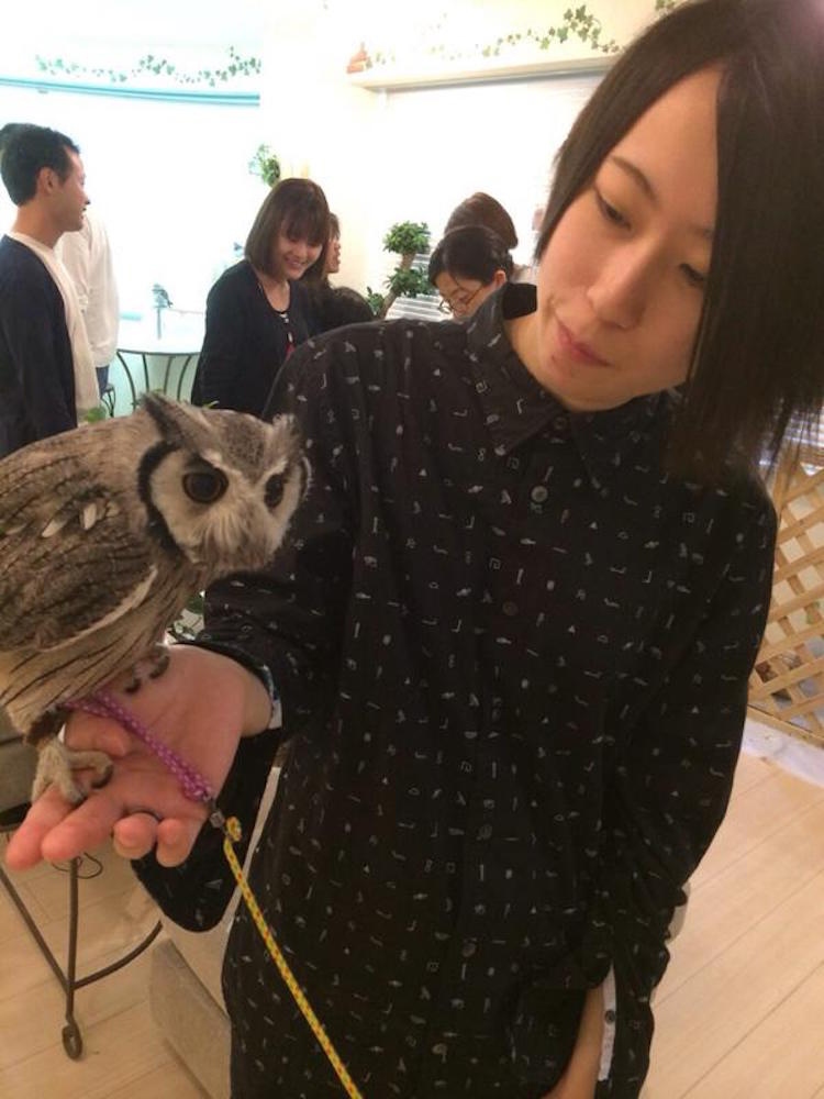 Pond Owl