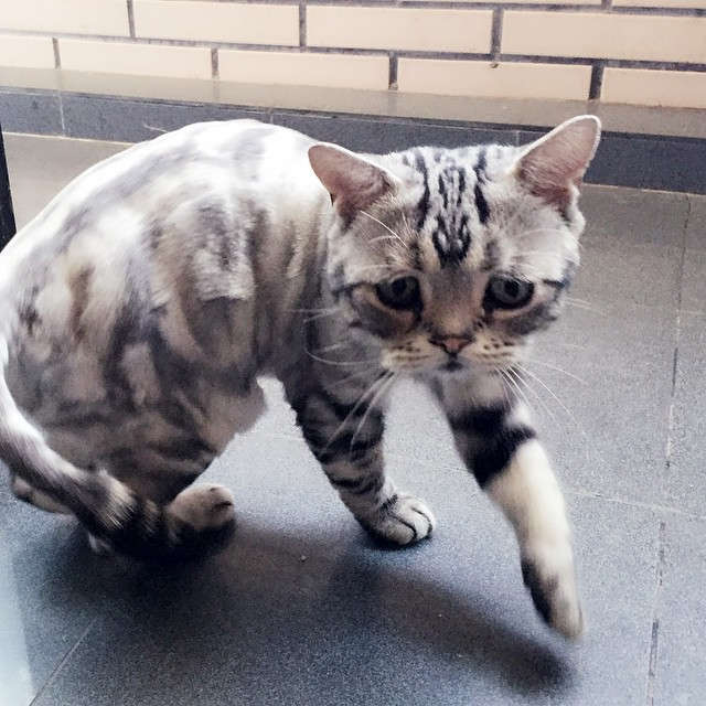 Sad Cat Walking