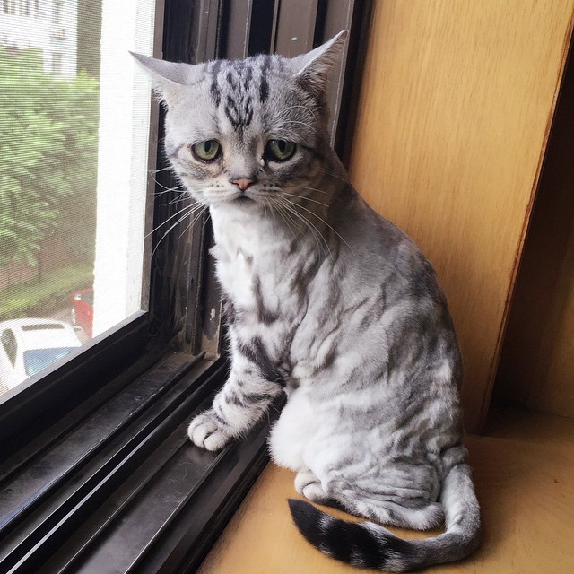 Sad Cat in Window