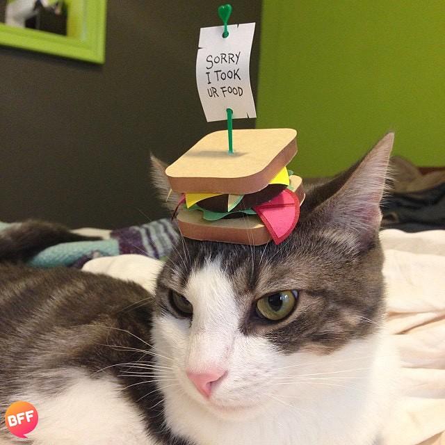 Sandwich Hat