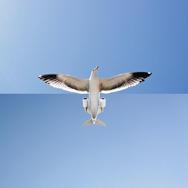 SeagullJet