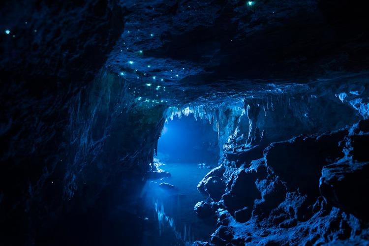 bioluminescent worms 2