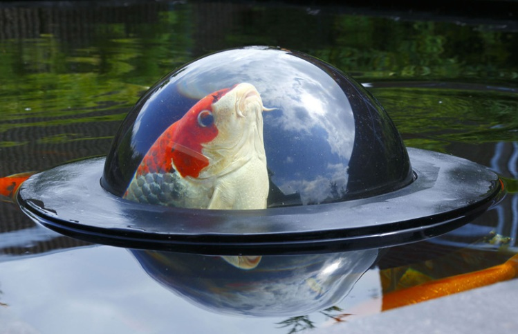 floating fish dome 1