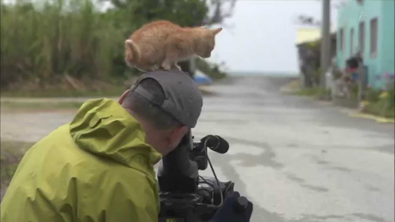 Tiny Orange Kitten Quickly Befriends a Famous Wildlife Photographer