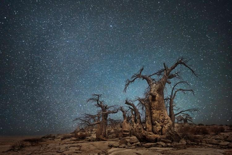 ancient trees ara