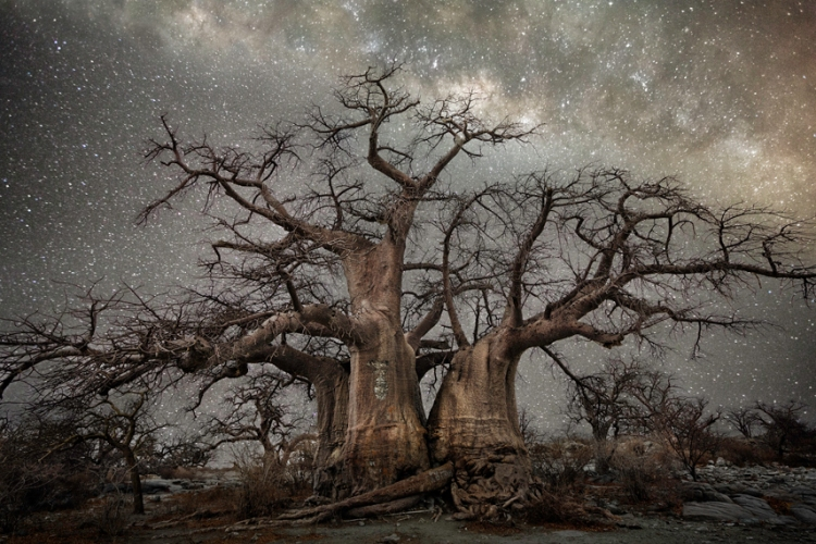 ancient trees fornax
