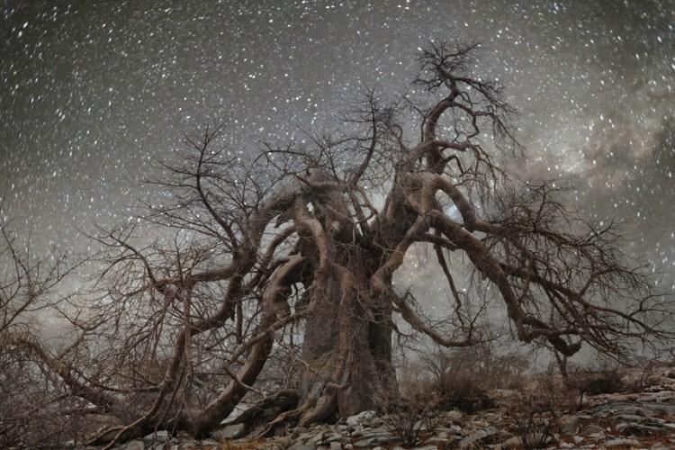 ancient trees hydra