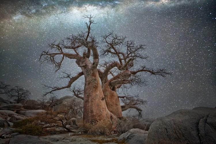 ancient trees vela