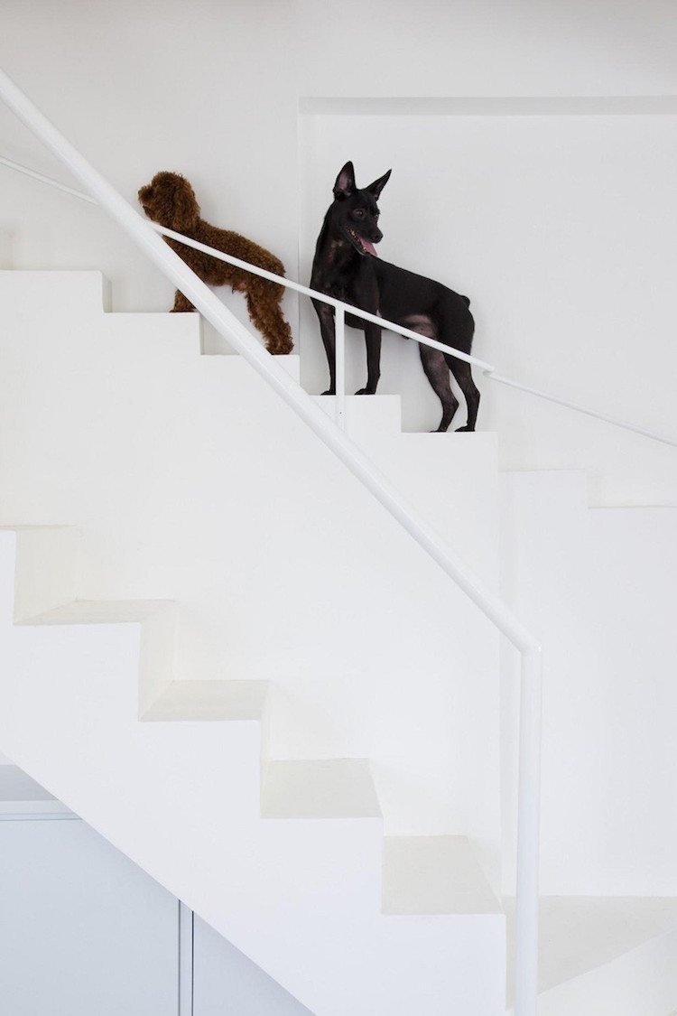 2 Dogs on Stair