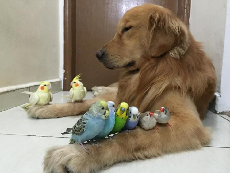 Bob and Birds