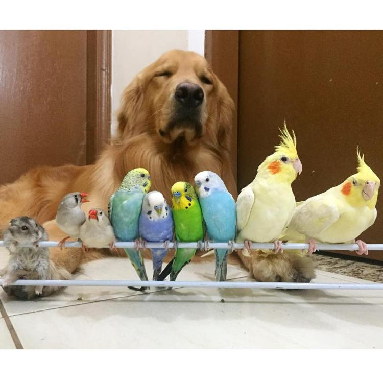Bob and Friends