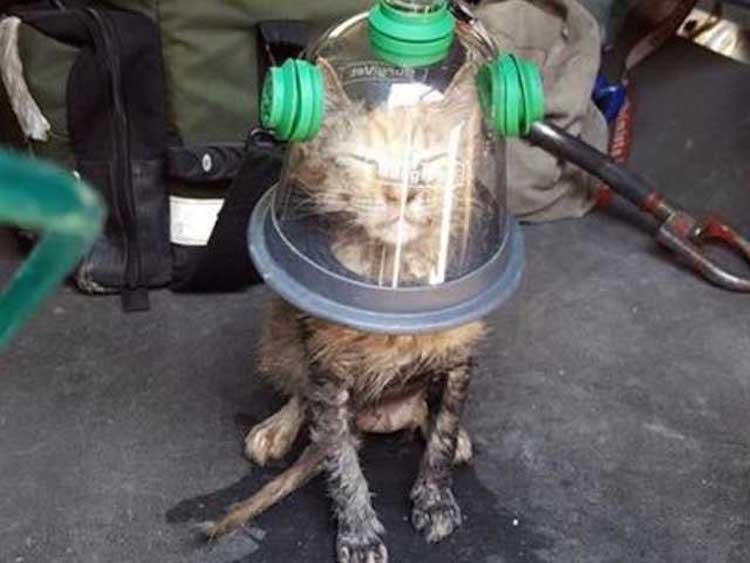 Cat in Oxygen Mask