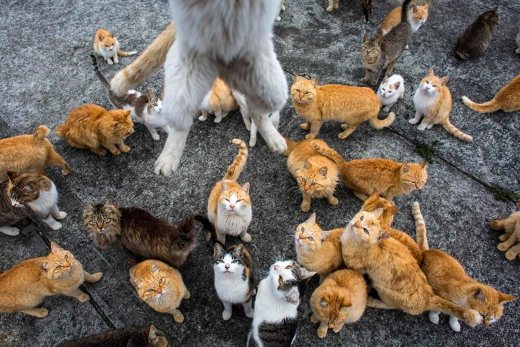 Its Raining Cats
