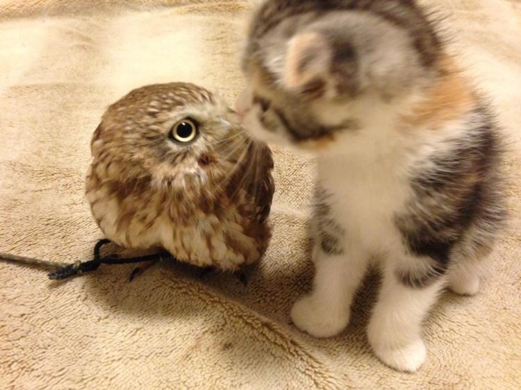 Kitten Kiss