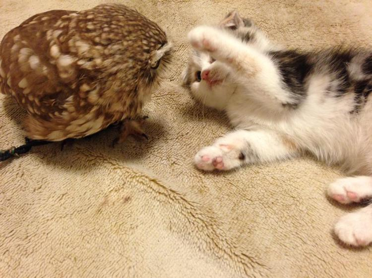 Kitten and Owl Playing