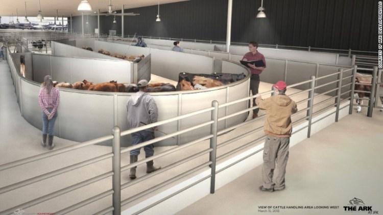 Livestock Arena