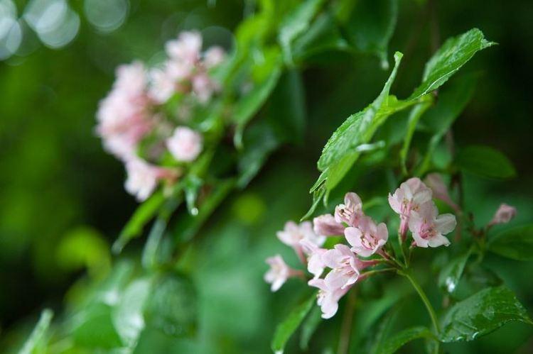 Skeleton Flowers Dry