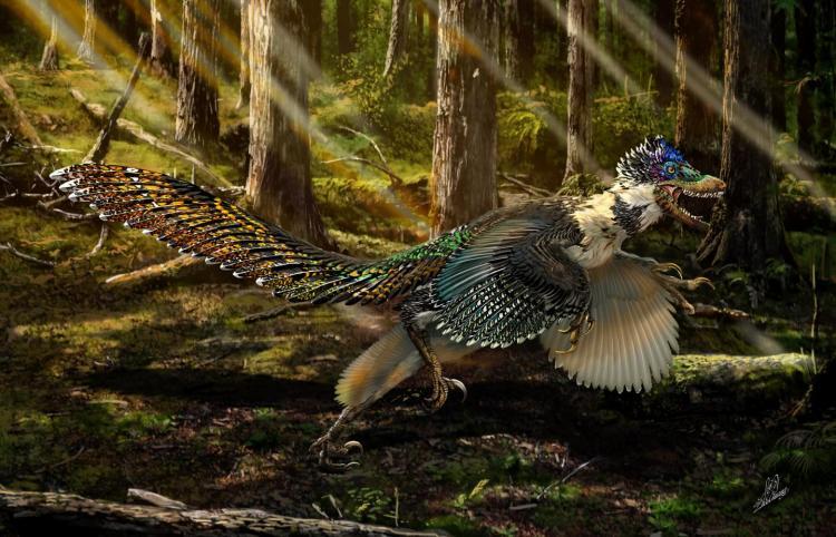 Zhenyuanlong feathered dinosaur zhao chuang interpretation
