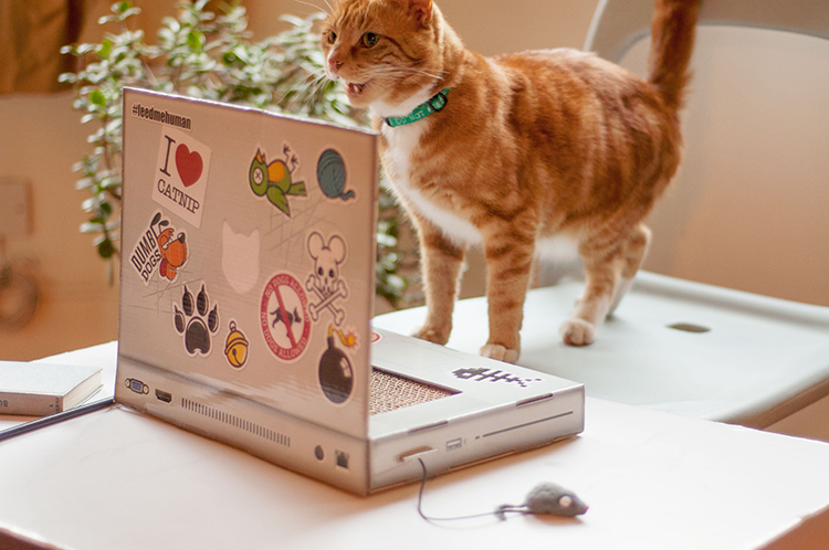 puter Desk With Keyboard Shelf as well Scratching Head Confused furthermore Soft Claws Cat Nail Caps besides MacBook Keyboard in addition Cat Scratching Post Meme. on cat scratching keyboard
