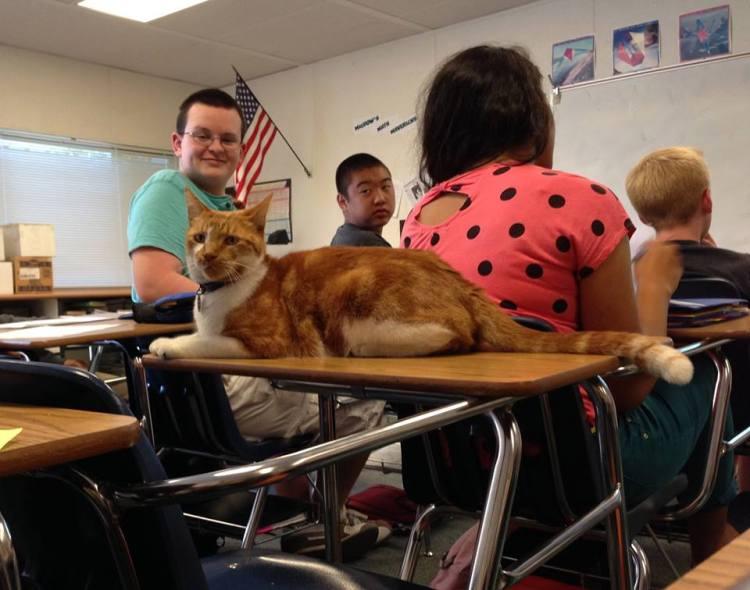 Bubba Classroom