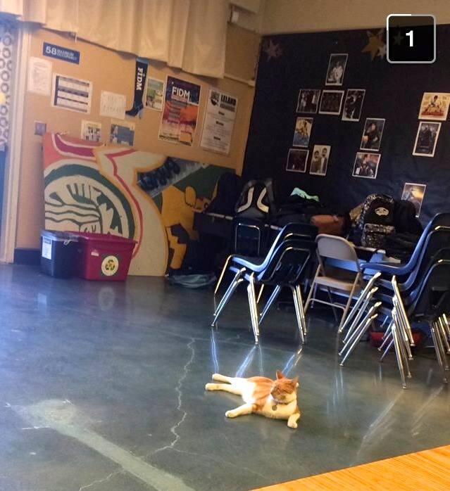 Bubba Floor