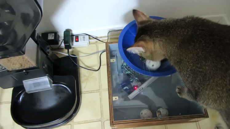 Cat Feeding Machine