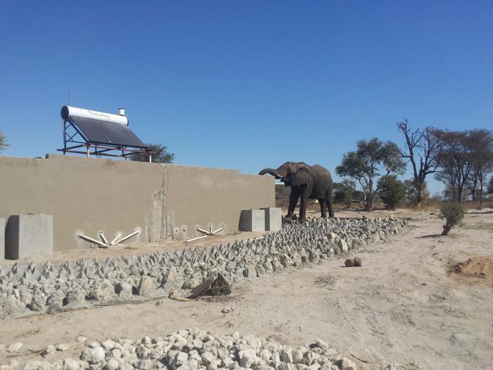 Elephant Over Wall