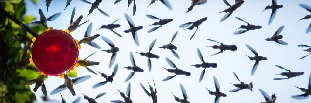 Photographer Creates an Amazing Composite Image of Hummingbirds Swarming Underneath the Feeder