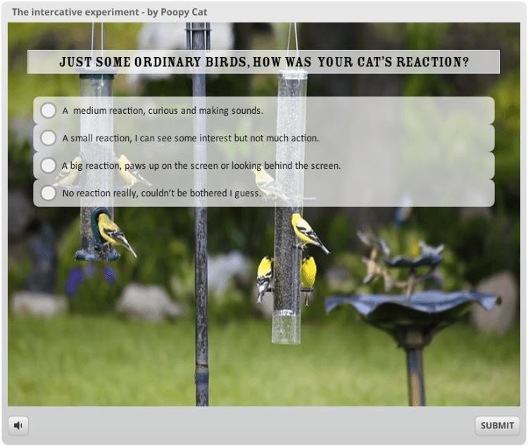 Intercative Birds