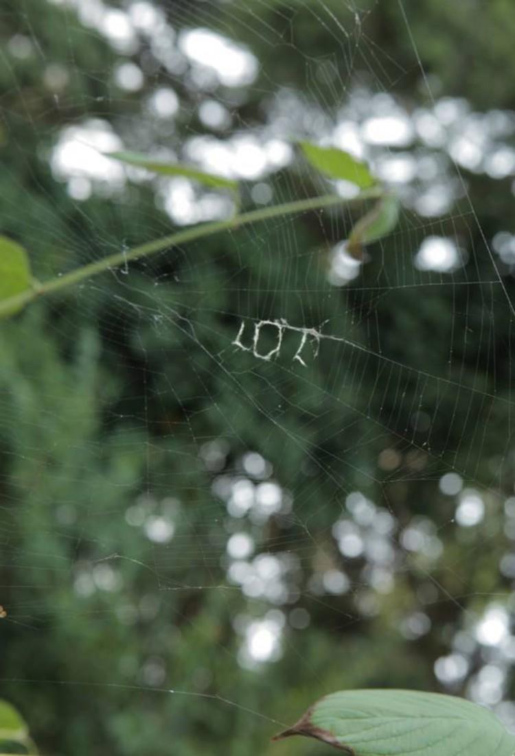 LOL Spider Web