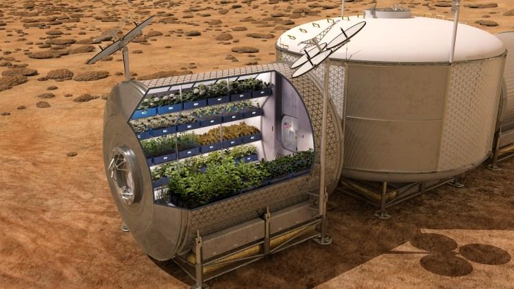 NASA Veggie