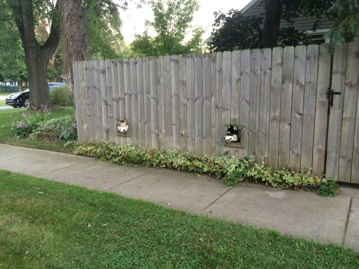 creative wooden fence that allows dogs to peek outside while still