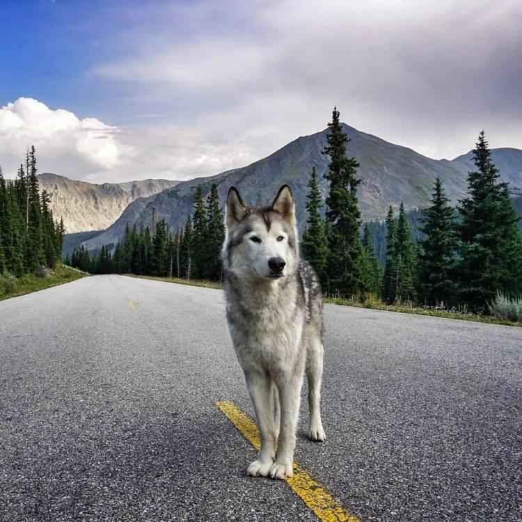 Loki on Road