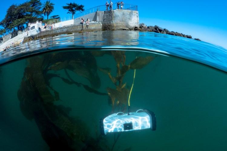 Trident Under Kelp Close