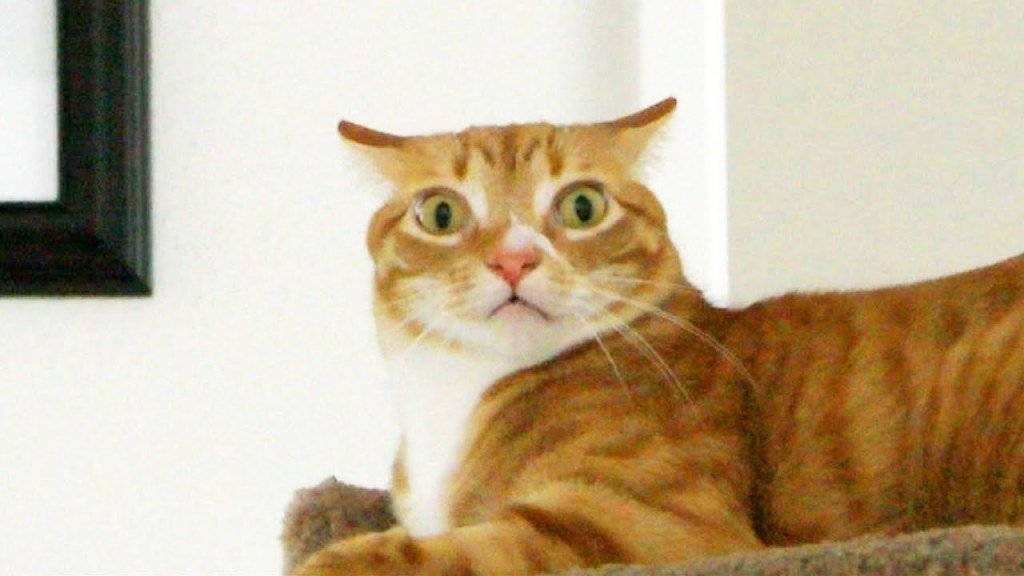 Cats Cole & Marmalade Humorously Demonstrate How Felines Express Their Emotions