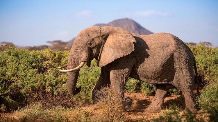 Google Adds Street View Imagery to the Samburu National Reserve in Kenya to Help Protect Wild Elephants