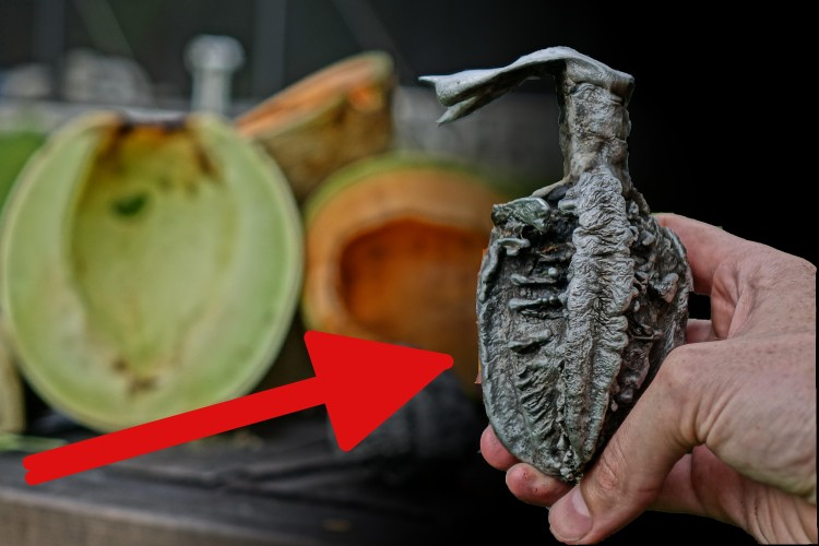 The Backyard Scientist Pours Molten Aluminum Into a Cantaloupe and a Honeydew Melon To See What Would Happen