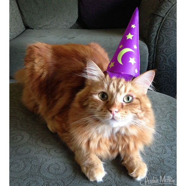 wizard_cat_1